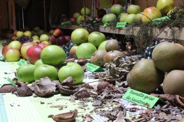 Présentation des différentes variétés de pommes, par les croqueurs de pommes de la Manche